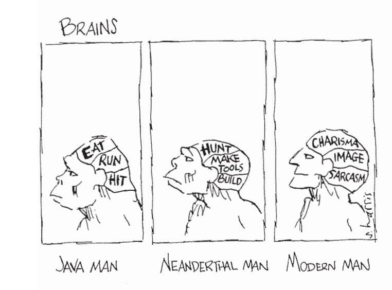 Image result for brains java man modern man cartoon